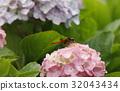 bloom, blossom, blossoms 32043434