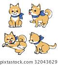 Shiba Inu 32043629