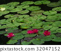 water, lily, water-lily 32047152