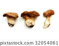 King oyster mushroom 32054061