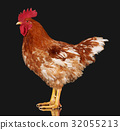 rooster, chicken, brown 32055213