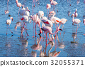 Group of pink flamingos on the sea 32055371