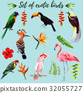 Set of exotic birds 32055727
