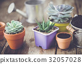 Succulents, bucket with soil and watering can 32057028