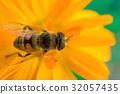 macro shot of a bee sitting on yellow flower 32057435