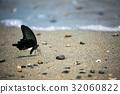 水辺の蝶々 32060822