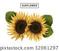 sunflower realistic illustration 32061297