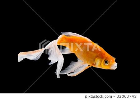 Goldfish isolated on black background 32063745