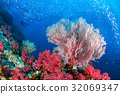 Underwater Similan,North Andaman Sea. 32069347