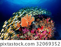 Wonderful underwater world. 32069352