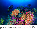 A photographer enjoyed diving in the blue world. 32069353