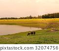 放牧 牧場 奶牛 32074756