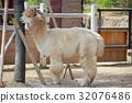 สัตว์,ภาพวาดมือ,สวนสัตว์ 32076486