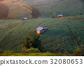 Landscape view of cabbage field at Phuthapboek 32080653
