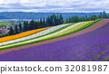 lavender and another flower field in hokkaido 32081987