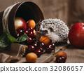 刺猬 水果 樱桃 32086657