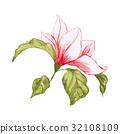 玉兰 花朵 花 32108109