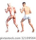 กล้ามเนื้อ,ร่างกาย,สรีระ 32109564