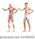 กล้ามเนื้อ,ร่างกาย,สรีระ 32109565