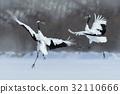 Dancing pair of Red-crowned crane 32110666