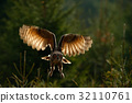 Flying Eurasian Eagle Owl with open wings 32110761