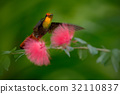 Beautiful Ruby-Topaz Hummingbird from Tobago 32110837