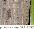 small tiny textured grey brown tropical lizard  32110897