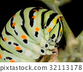 A closeup of a beautiful Machaon caterpillar 32113178