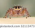 A beautiful spider 32113473