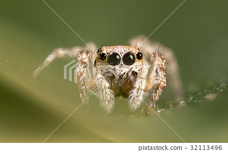 A beautiful spider 32113496