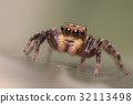 A beautiful spider 32113498