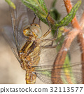 A beautiful dragonfly close portrait 32113577