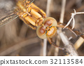 A close-up of a beautiful dragonfly 32113584