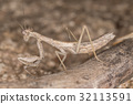 A close-up portrait of a mantis 32113591