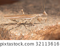 A close-up portrait of a mantis 32113616
