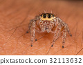 A closeup of a  beautiful spider 32113632