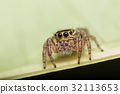 A closeup of a  beautiful spider 32113653