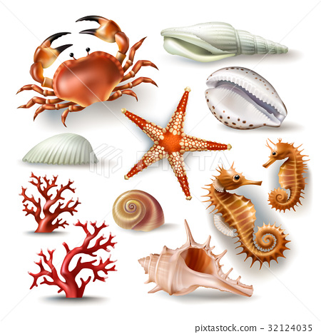 Set of vector illustrations seashells, coral, crab 32124035