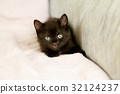 Black kitten on couch 32124237