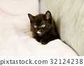 Black kitten on couch 32124238