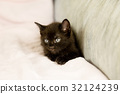 Black kitten on couch 32124239