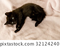Black kitten on couch 32124240
