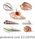 Set of illustrations seashells of various kinds in 32139358