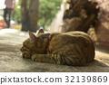 貓 32139869