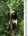 Big panda 32142548