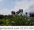 花朵 花卉 花 32151164