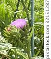 花朵 花卉 花 32151287