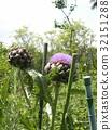 花朵 花卉 花 32151288