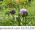 花朵 花卉 花 32151290