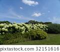花朵 花卉 花 32151616